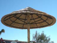 African Reed Palapa